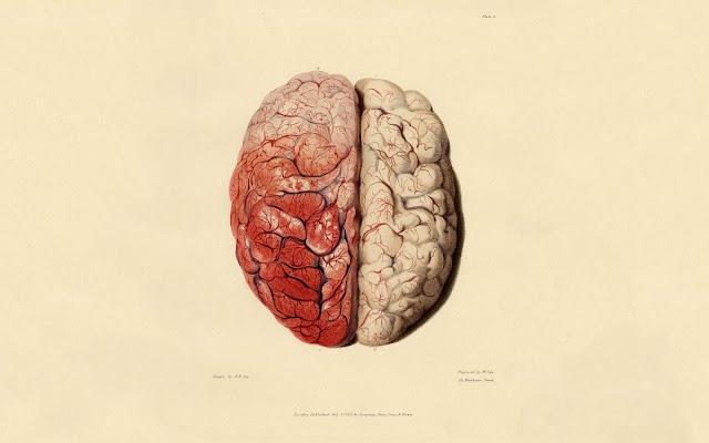 رحلة لاستكشاف العقل البشري