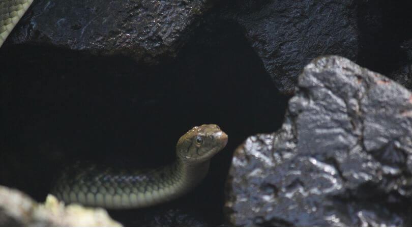 Mimpi ketemu ular berdasarkan jenis