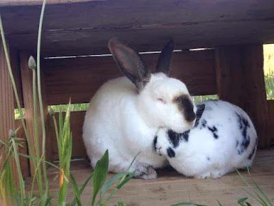 profitable rabbit farming guide