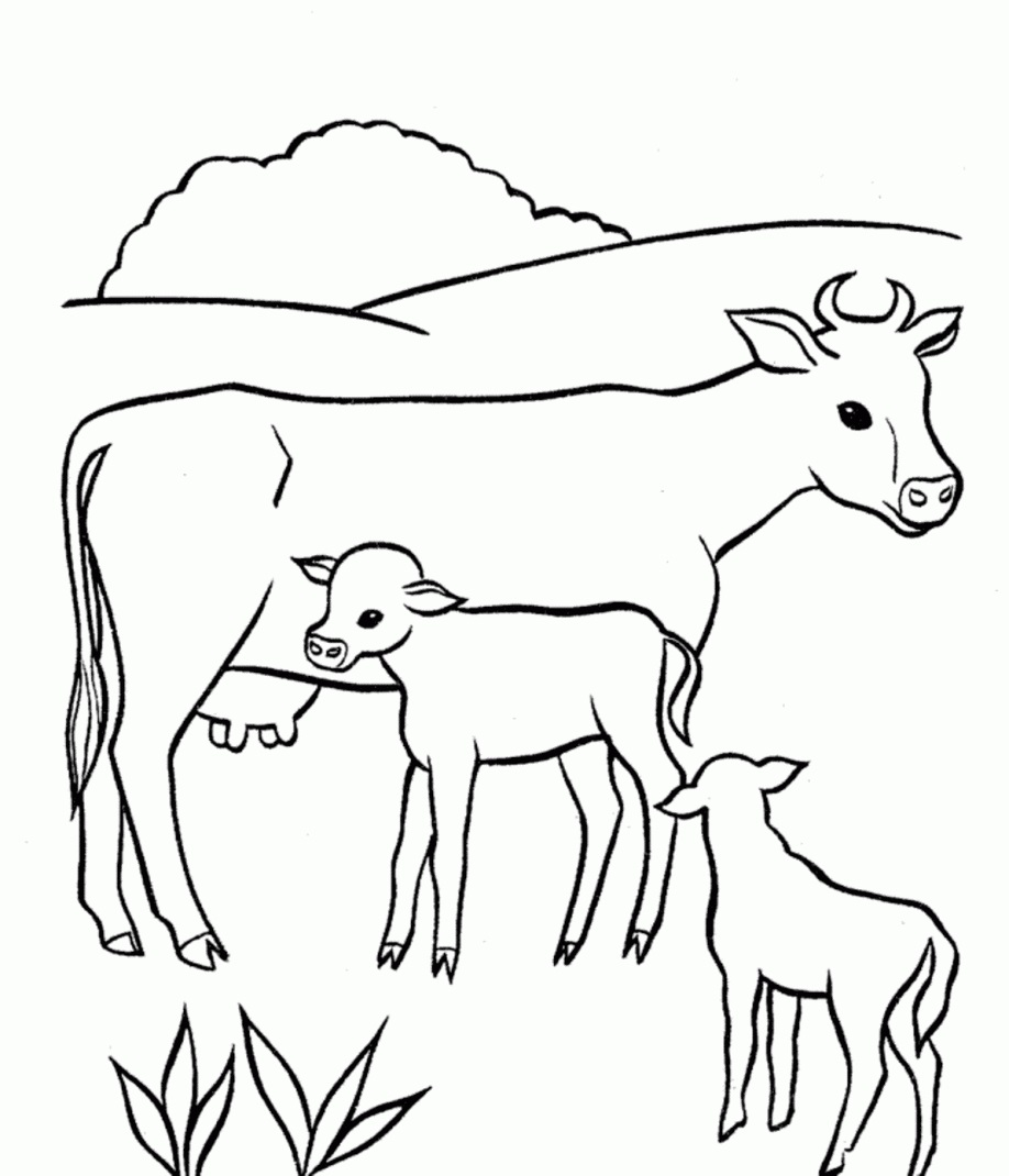 Cow and Baby Coloring Pages