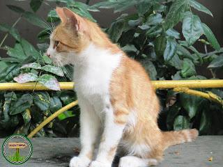 Odesa - Orașul pisicilor