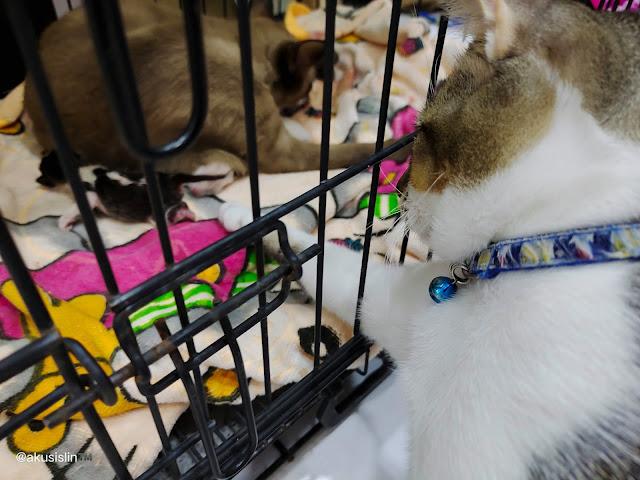 1 Mei Hari Pekerja, Kucing Aku Beranak!