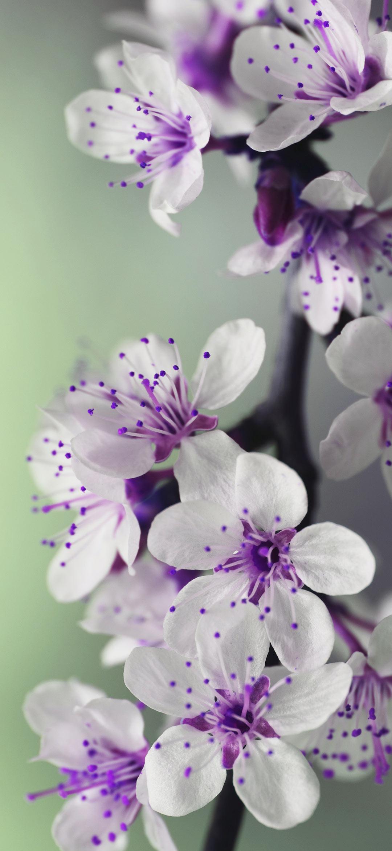 White and purple petal flower
