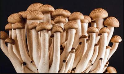 Ringkasan Materi Pelajaran tentang Fungi (jamur)