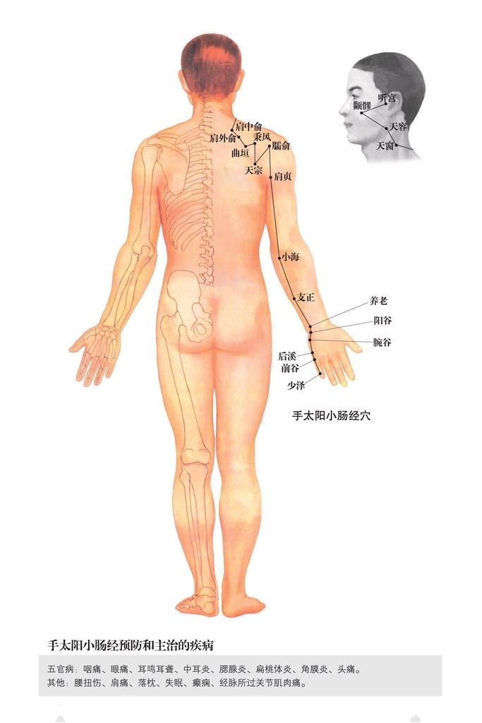背部穴道圖 - 背部穴道小腸經 | Source:jingluoxuewei.com/zixun/112_7.html