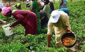 LA BAD FINANCE DES PROJETS AGRICOLES ET D'INVESTISSEMENT AU SENEGAL : Projets, plan, développement, économie, agriculture, énergie, PSE, LEUKSENEGAL, Dakar, Sénégal, Afrique
