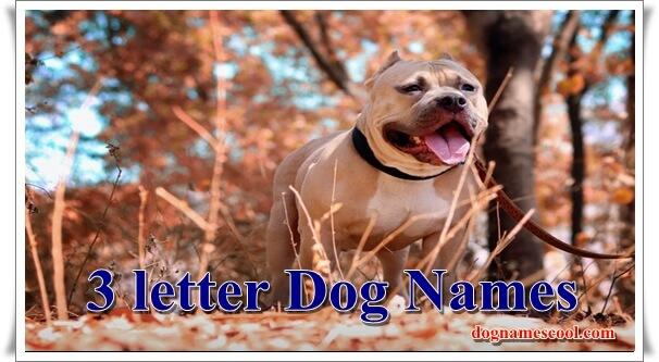 3 Letter dog names