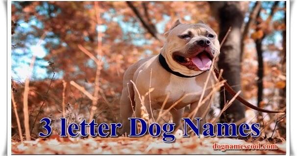 Best 3 Letter Dog Names The Shorter Is Always Better