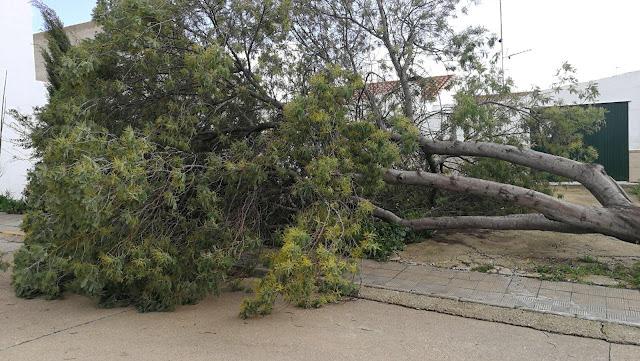 http://www.esvalverde.com/2018/03/siguen-los-efectos-del-temporal-en.html