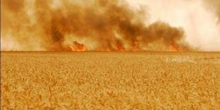 بنزرت : حريق هائل يأتي على 6 هكتارات من القمح
