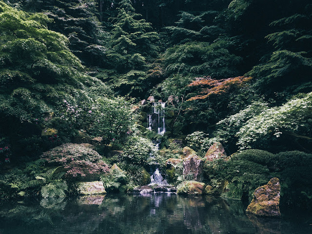 http://leaberphotos.tumblr.com/post/146013283176/portlandjapanesegarden052516