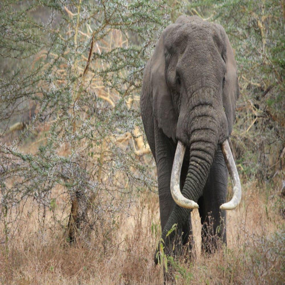 kak-nachat-trevel-blog-indijskij-slon