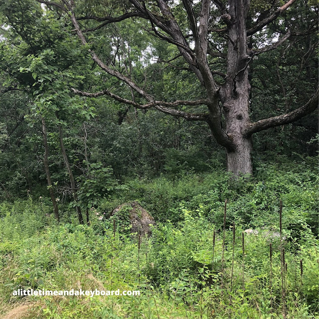 An interesting tree intrigues in the forest at Fox Bluff Conservation Area
