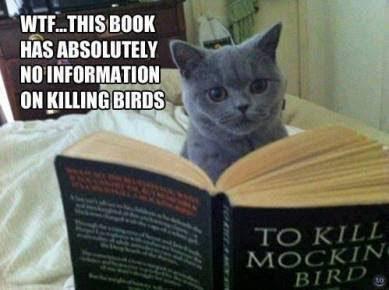 Meme de humor sobre el libro Matar a un ruiseñor
