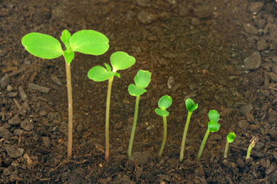 Allow Time For Germination
