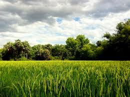 Sharmalan Thevar: The 5 Landscapes of Tamilakam