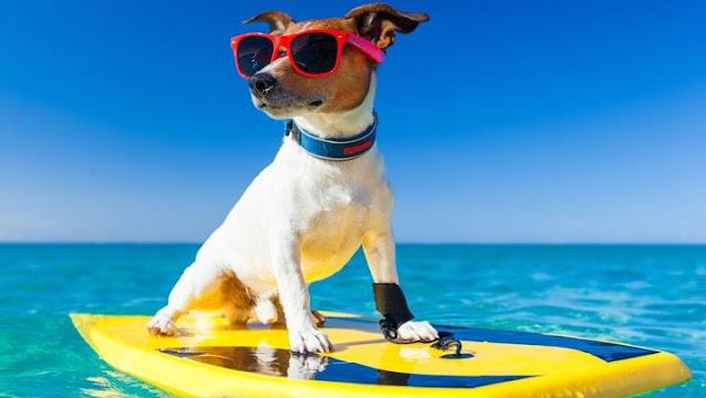 Γιατί δεν πρέπει να αφήσουμε το σκυλάκι μας να πιεί θαλασσινό νερό