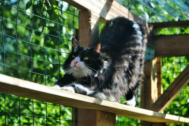 القطط من أكثر الحيوانات التي تقاوم درجات الحرارة المرتفعة
