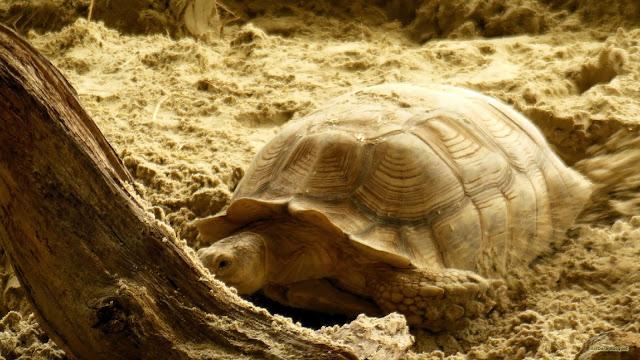 Schildpad in Dierentuin Emmen