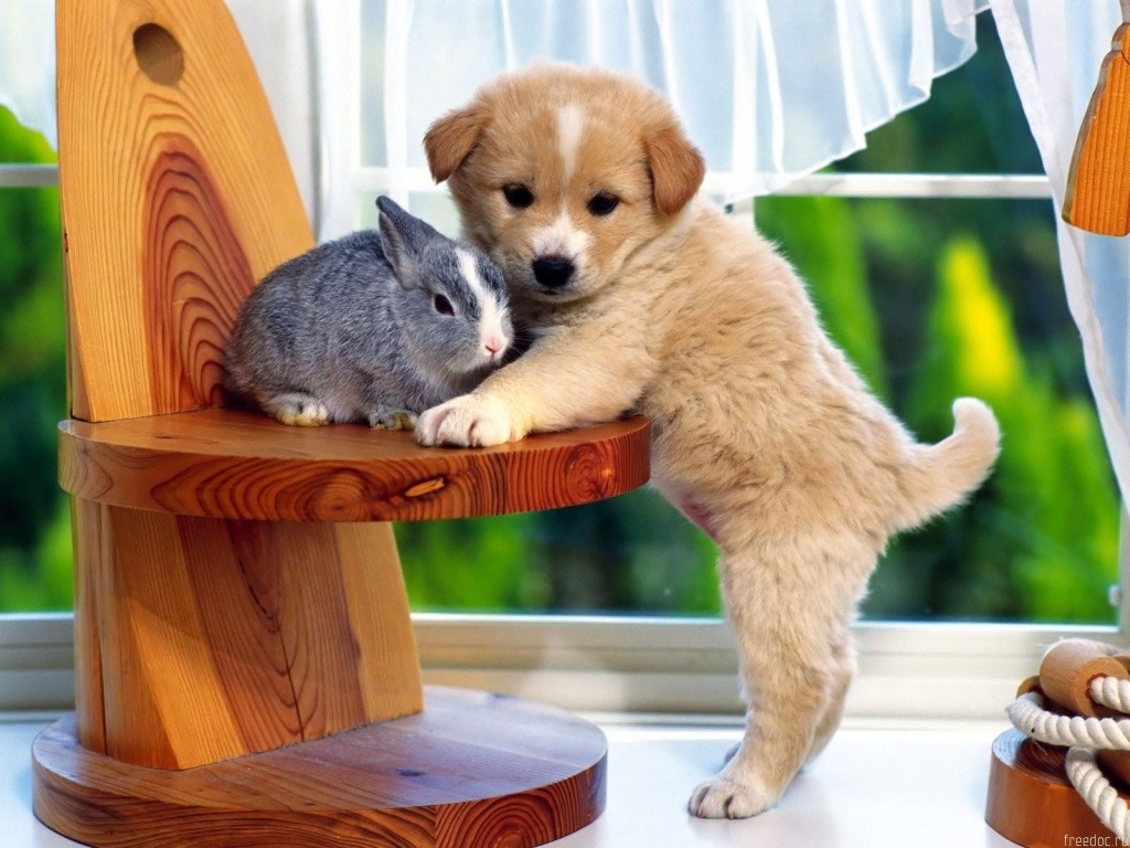 All Wallpapers: Funny Dogs Wallpapers