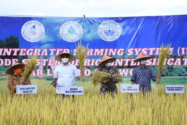 Gubernur NTB berharap metode tanam padi SRI dan Jarwo tingkatkan produksi