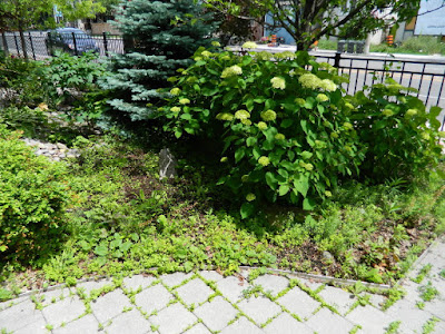 The Beach Front Garden Makeover Before by Paul Jung Gardening Services--a Toronto Gardening Company