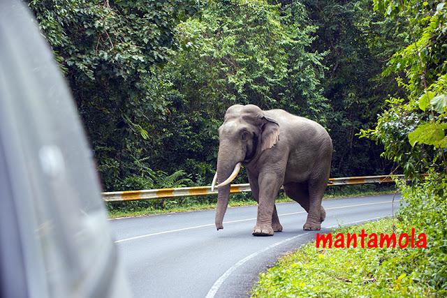 Elephant of Thailand
