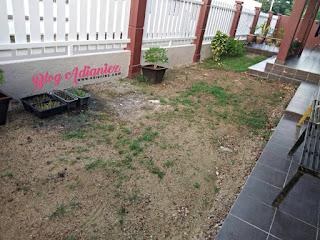 Dekorasi Laman | Tanam rumput karpet filipina bagi memperindah halaman rumah