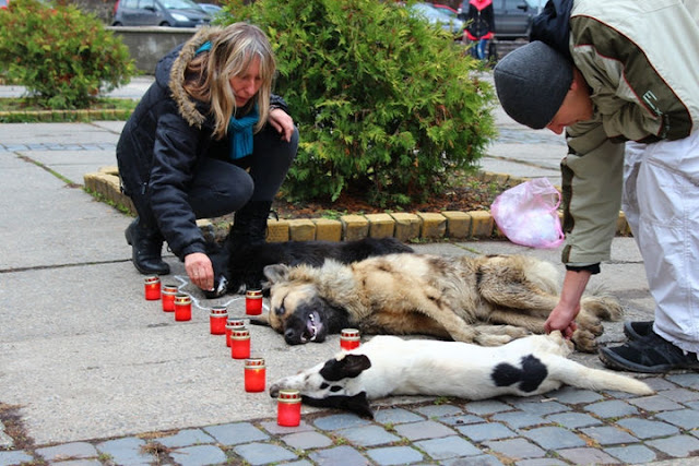 «Они валяются везде, это страшно«»: в Туве начали жестокий отстрел бездомных собак