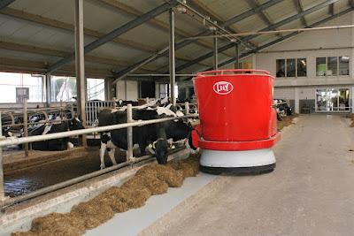 Peternakan sapi perah