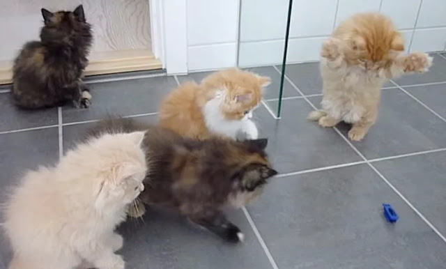 When Five Fluffy Kittens Spot an Intruder, All Purrsonalities Come Out!