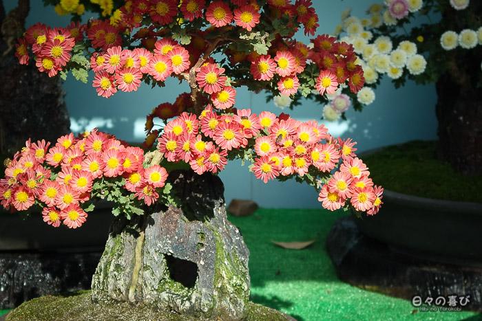Bonsai fleuri exposé lors du marché floral, Château de Fukuyama, Hiroshima-ken