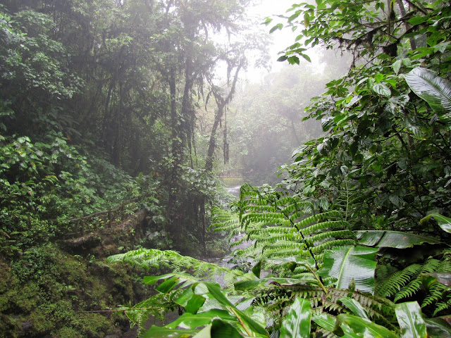 Cloud Rainforest at La Paz Gardens, Costa Rica