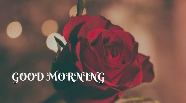 good morning rose images hd free download