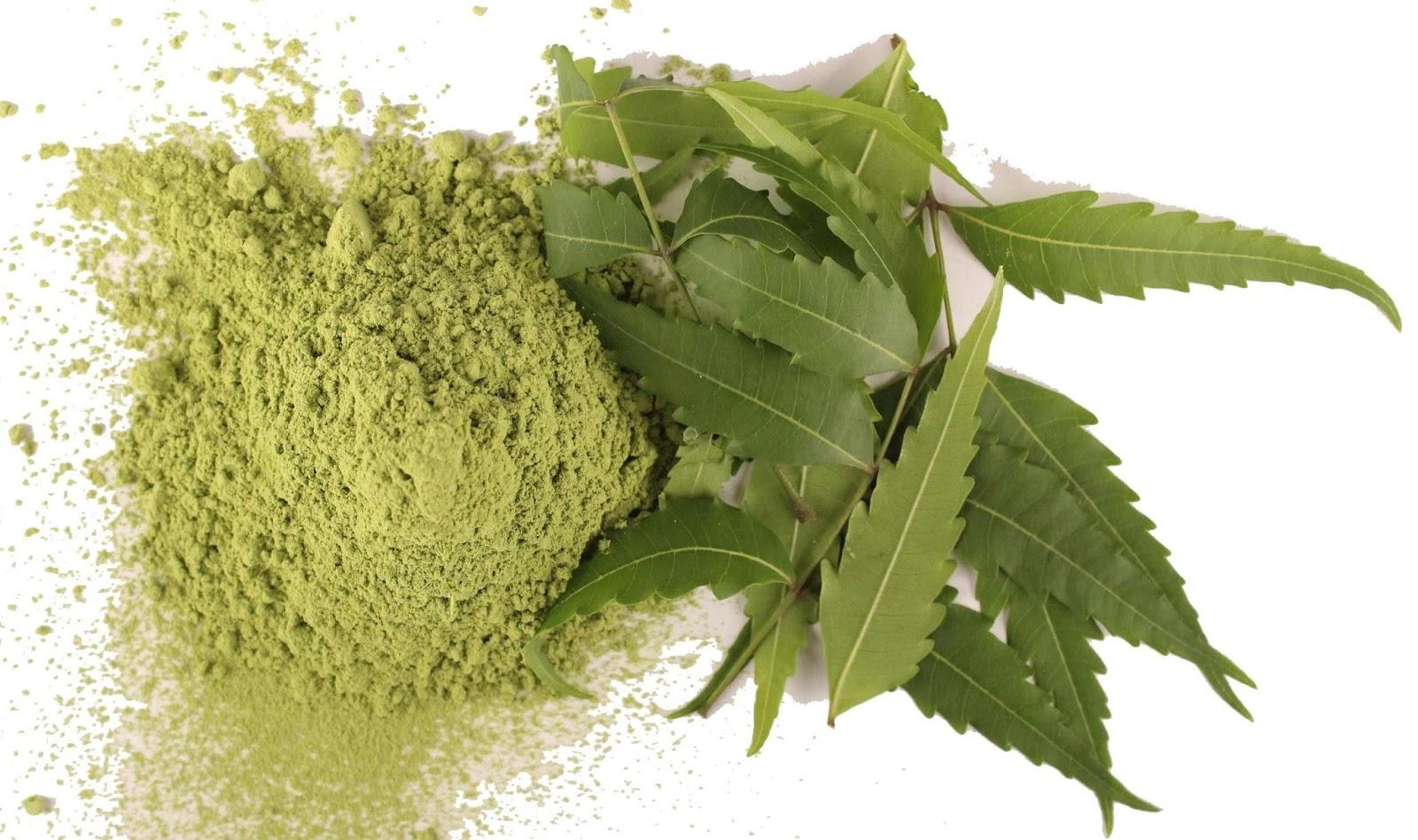 Ayurveda Herbs - Neem Leaves for Beautiful and Glowing Skin