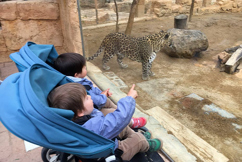 Niños viendo un leopardo en la reserva zoológica