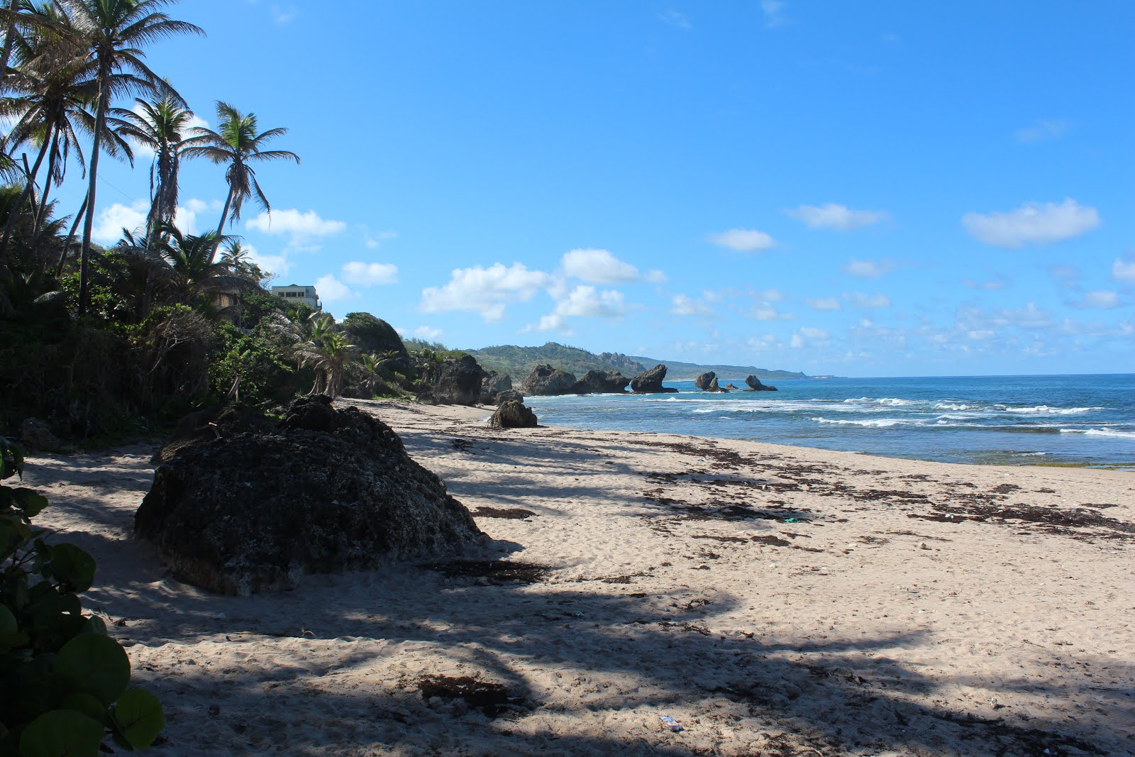 Rugged Beach of Bathsheba St Joseph Barbados