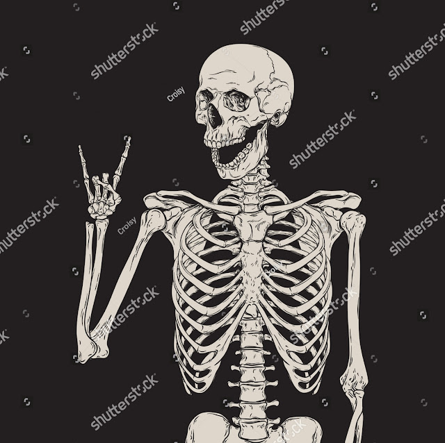 Human bones, human skeleton systems