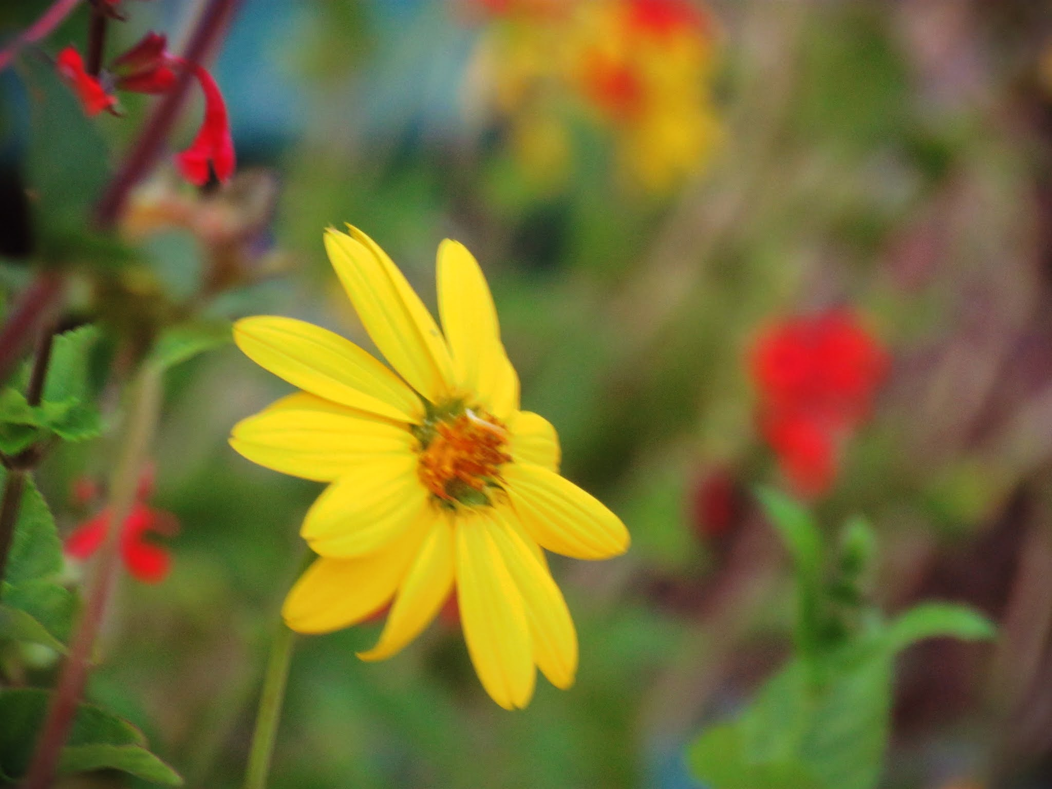 Blurred photography summer meadow photo with colorful flowers bursting to life in a botanical garden of simple delights in Florida
