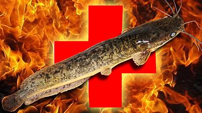 Jenis-Jenis Penyakit Pada Ikan Lele