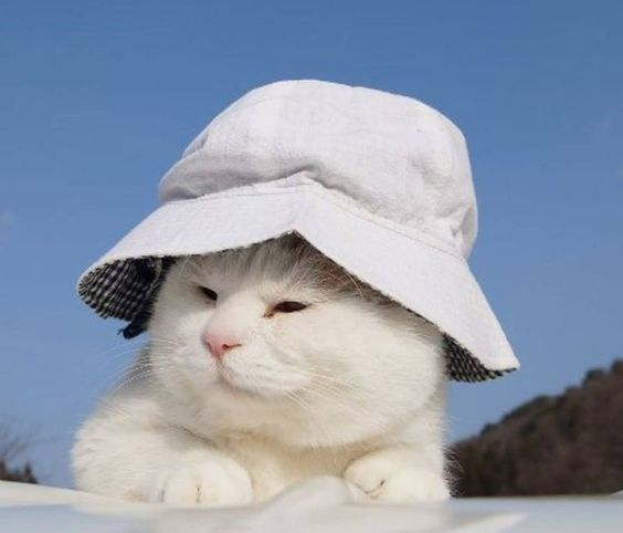 Tổng hợp hình ảnh về mèo cute