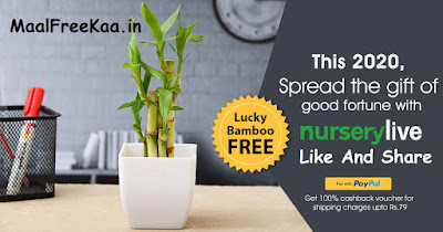 Free Bamboo Plant