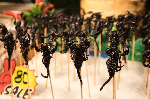 Fried scorpions and street food should be tried in Chiang Mai