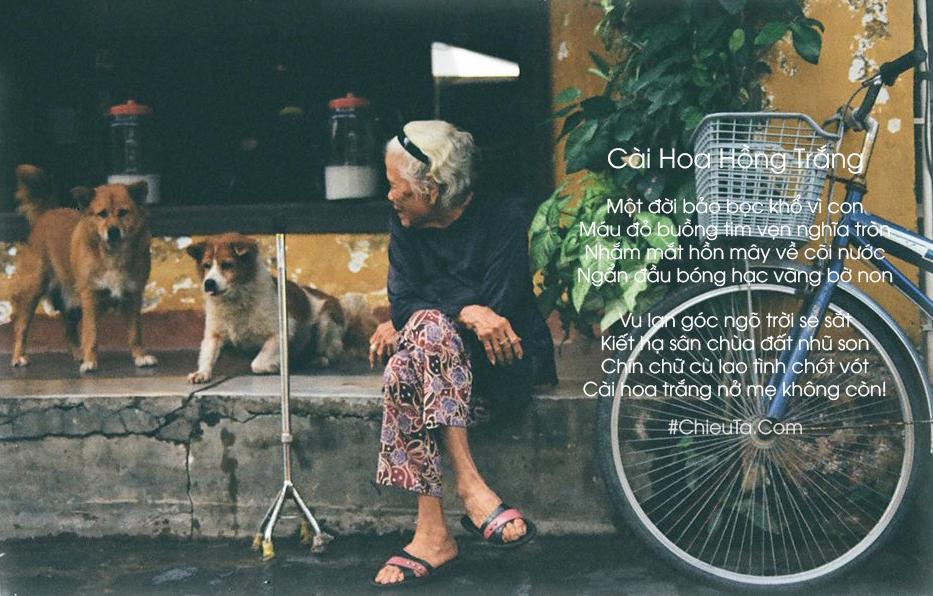 Thơ Lễ Vu Lan - Chùm Thơ Báo Hiếu Mẹ Tháng 7 Âm Lịch Cảm Động & Hay