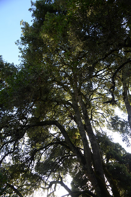 tall trees to their tops