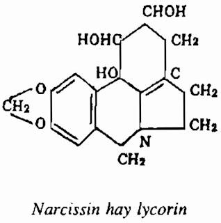 Thành phần hóa học HOA THỦY TIÊN - Narcissus tazetta - Nguyên liệu làm thuốc Chữa Ho Hen