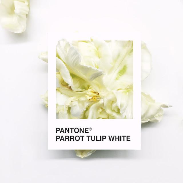Pantone Flowers, un colorido proyecto realizado con hermosas flores