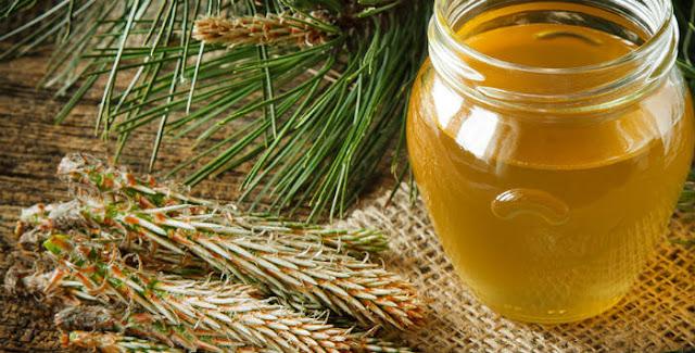 Borov med – lekoviti prirodni preparat protiv kašlja