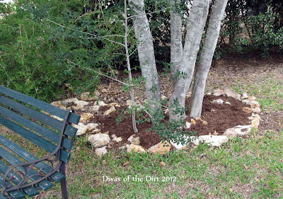 Divasofthedirt,weeded mulched yaupon bed