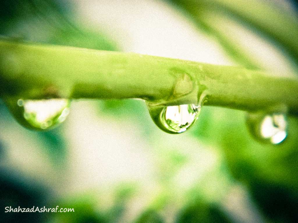 three Water droplet on like gems on branch of a tree after rain